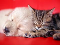 怎么让狗狗和猫猫和平相处?这一招简单有效!