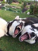 狗狗特别活泼好动怎么办?