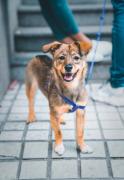训练狗狗怎样的奖励方式比较好?