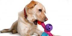 狗狗喜欢什么玩具?如何正确为狗狗选择玩具