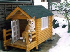 狗狗不进狗窝怎么办