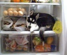 狗狗绝对不能吃的食物有哪些
