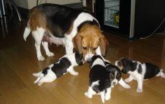 判断狗狗身体是否健康,这7个部位看完就放心了