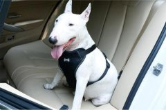 怎么让狗狗适应坐车旅行,狗狗不会坐车怎么办