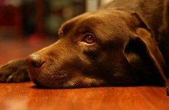 如何喂养老年犬?老年犬喂养注意事项
