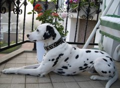 狗的品种分类有哪些,什么品种的宠物狗更受欢