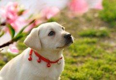 春季养狗注意事项,让狗狗