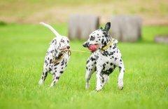 狗狗第一次去公园需要注意什么?