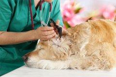 如何让狗狗适应兽医