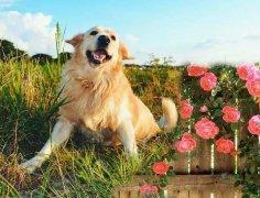 带狗狗户外活动,记住这些常见有毒的植物