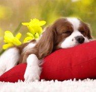 狗狗感冒症状,怎么给狗狗测
