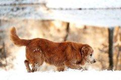 冬季养狗注意事项,新手养