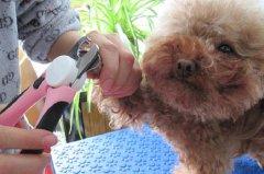 狗美容工具有哪些?