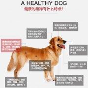 如何判断狗狗反应是否机灵一招就够了!